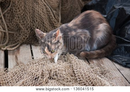 Street cat eats the fish on the fishing net.