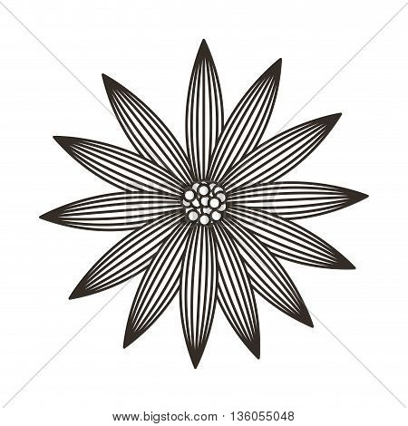 sunflower isolated icon design, vector illustration  graphic