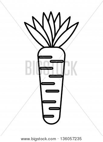 carrot fresh vegetable isolated icon design, vector illustration  graphic