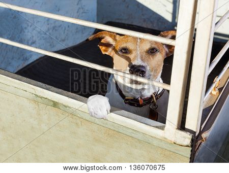 Dog In Shelter Cage