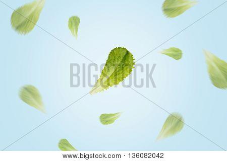 Flying lettuce leaves on blue background. Focus on central leaf