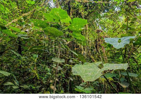 Tropical Plants From Amazonian Jungle Cuyabeno Wildlife Reserve South America