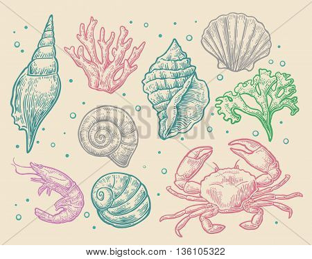 Set sea shell coral crab and shrimp. Vector engraving vintage illustrations. Isolated on white background.