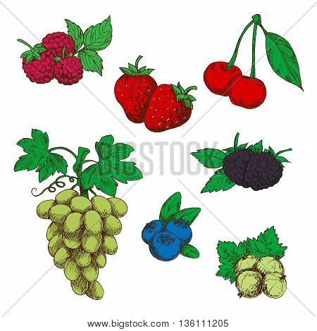 Fragrant wild strawberries, raspberries, blackberries and blueberries, green table grapes, sweet cherries, and gooseberries fruits with fresh green leaves and stems sketch icons in retro style