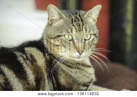 Portrait of a family cat shot in shallow dof