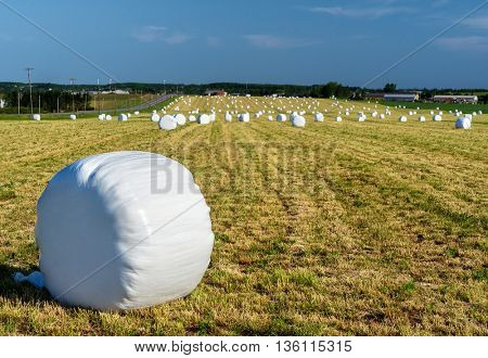 Bales of wrapped straw or hay on a farm field.