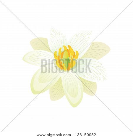 Beauty flower design flat style isolated. Blooming white flower with big beautiful petals, summer or spring nature floral plant and graphic blossom exotic natural flora, vector illustration