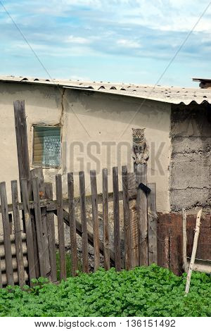 Gray Cat Sitting On A Fence In The Village.