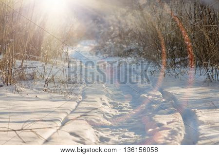 The path trodden in the snow in the winter in the forest