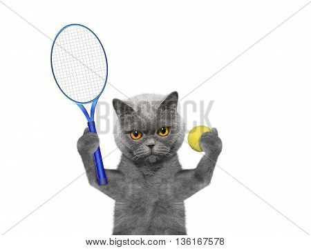 Cat is going to play tennis -- isolated on white