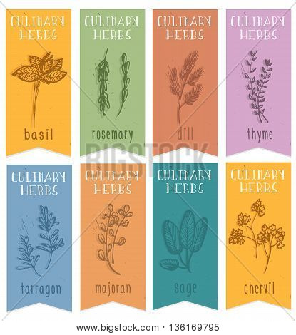 Set of 8 herbal labels on hand drawn sketch. Vertical banners with basil chervil rosemaridill sage tarragon majoranthyme. Great for cooking medical gardening design. Vector Illustration