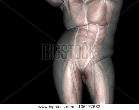 Concept or conceptual 3D fat overweight vs slim fit diet with muscles young man black gradient background metaphor weight loss, body, fitness, fatness, obesity, health, healthy, male, dieting, shape