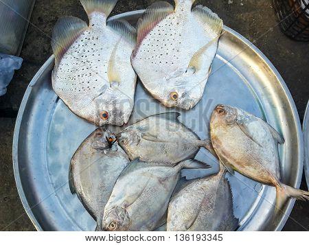 Raw fresh fish in market seafood Thailand
