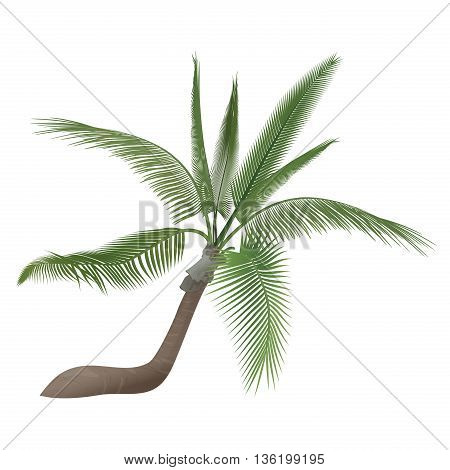 Vector tropical exotic high detailed palm tree isolated
