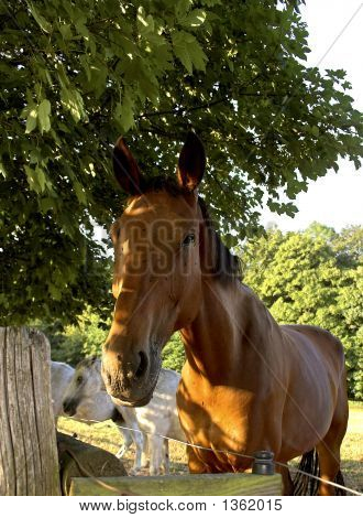 Horse In Denmark