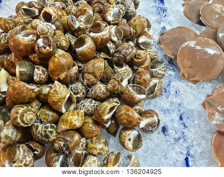 Mussels raw fresh seafood in market Thailand