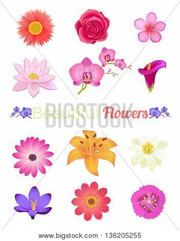 Flower color set design flat isolated. Flower floral, nature flower summer rose, spring flower, plant garden flower, petal flower, blossom flower, color flora, eco natural flower, bloom illustration