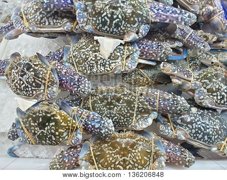 Crabs raw fresh seafood in market Thailand