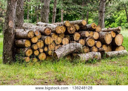 Pile Of Cut Trees