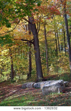 Autumn Scene 9