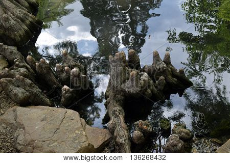 the shadows along a rocky shore mirror the trees and sky