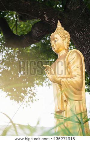 Golden buddha statue standing postures under big tree.