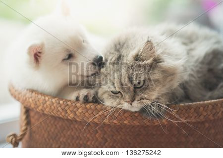 Cute siberian husky and persian cat lying in basket bed