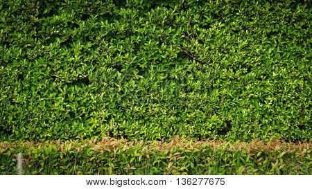 Green leaves on background with copy space