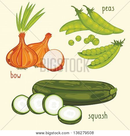 Set of vegetables mix. Vector bow, peas and squash vegetables. Natural organic. Ingredients for vegetables salad. Isolated bow, peas and squash vegetables. Half of different vegetables.