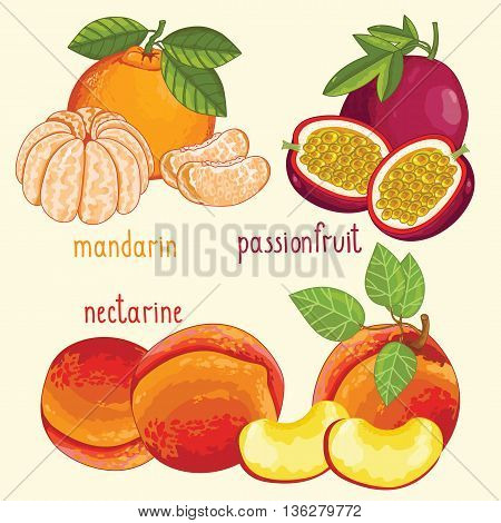 Set of fruit mix vector isolated. Healthy eat. Passion fruit, mandarin and nectarine fruit. Natural organic food. Ingredients for fruit salad. Sweet and ripe summer fruit. Isolated passion fruit, mandarin, nectarin fruit.
