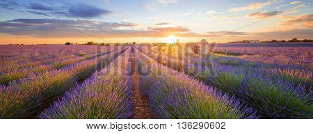 Panoramic view of lavender filed in Valensole. Provence France