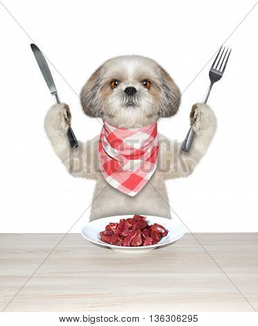 Dog is going to eat meat -- isolated on white