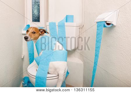 Dog On Toilet Seat And Paper Rolls