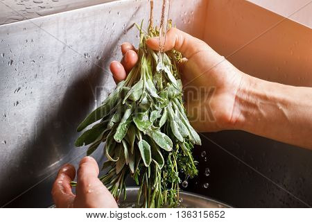 Male hands washing sage. Sage under flow of water. Thyme and sage for salad. Herbs from farmer's market.
