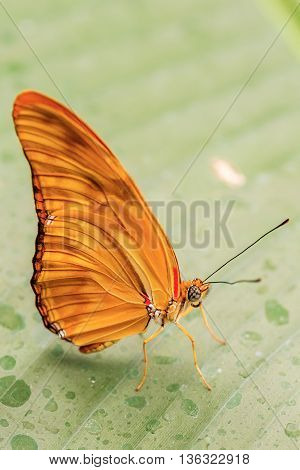 Beautiful Butterfly On The Leaf.