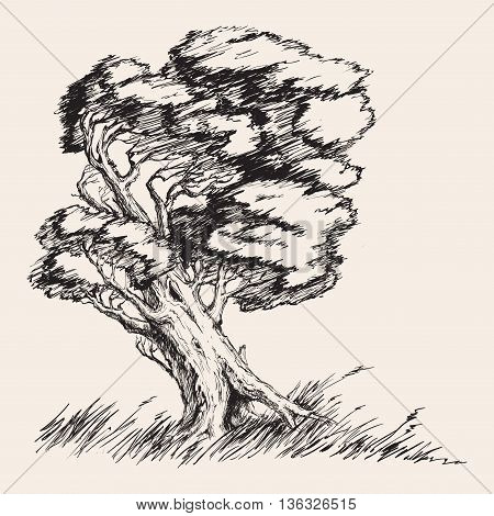 Strong wind tree hand drawn vector illustration