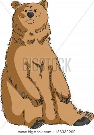 Sitting Grizzly bear isolated . Vector illustration