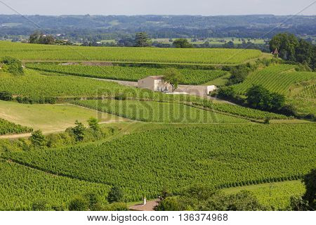 Famous French Vineyard at Saint Emilion town near Bordeaux, France