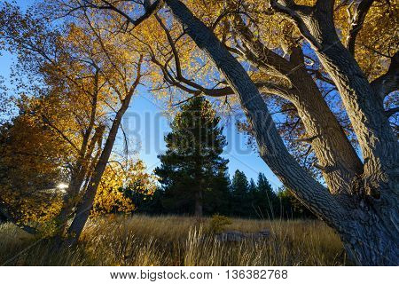 Landscape image of trees and the forest around Lake Tekapo in the glacier valley in Canterbury, New Zealand during autumn.