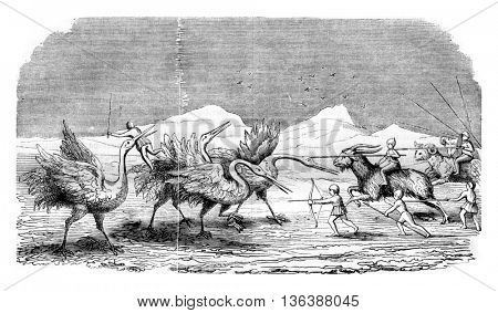 Pygmies fighting the cranes, vintage engraved illustration. Magasin Pittoresque 1843.