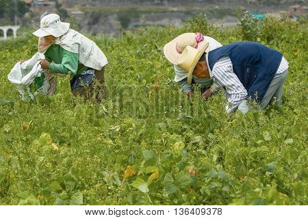 AREQUIPA PERU - APRIL 6 2012: Three People Working on a Field in Arequipa Peru