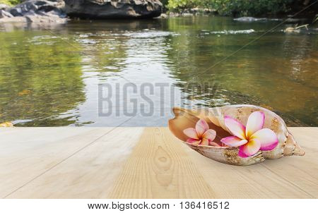 Pink Flower Plumeria Or Frangipani In Sea Conch Shell On Wooden Tatble Top