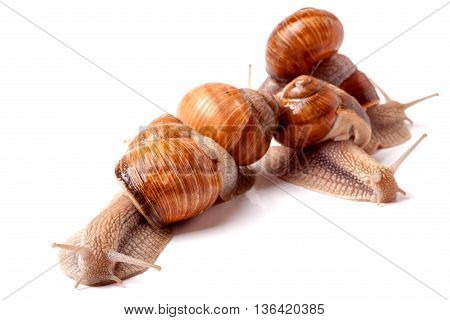 some snails crawling on a white background closeup.