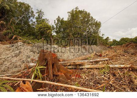 Logging deforestation environmental problem