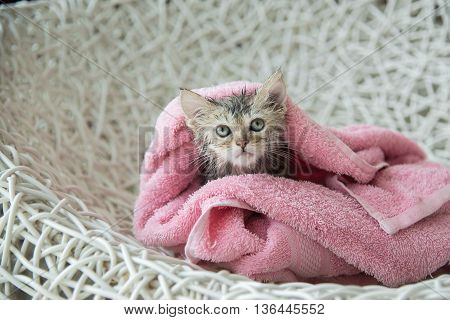 Cute soggy kitten after a bath in pink towel