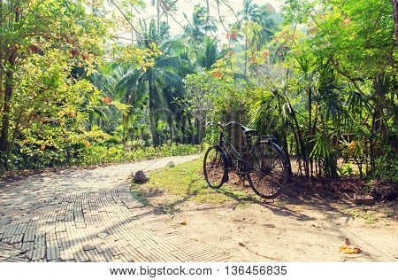 leisure, travel, tourism and nature concept - bicycle at tropical park roadway