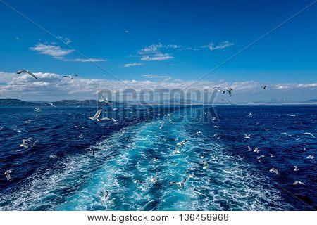 Seagulls on a cruise in the Mediterranean, Piraeus to Aegina, Greece