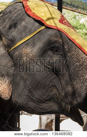 The close portrait of elephant in the circus