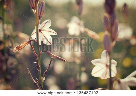 Wild flower close up in Zaragoza Province, Aragon, Spain.