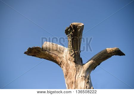 The trunk of dead tree on blue sky background